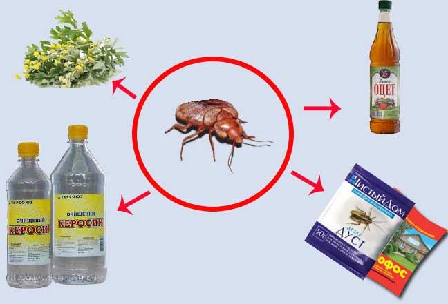 как эффективно избавится от паразитов